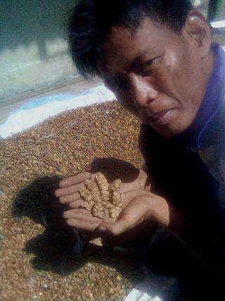 Kopi-sumatra-farmer